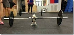 DeadliftPuppy